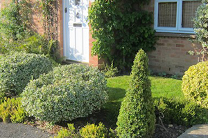 Landscape gardeners in Haywards Heath and Scaynes Hill