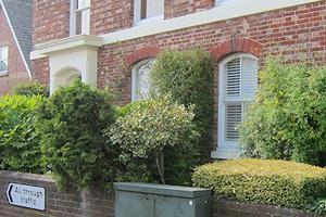town garden in Tunbridge Wells Drew Neat