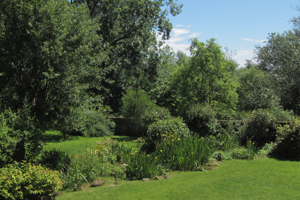 Lawn shrubs summer