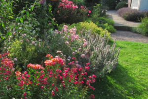 Drew Neat garden care herbaceous border