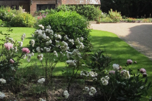 rose bed and driveway