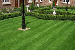 striped lawn with box edging