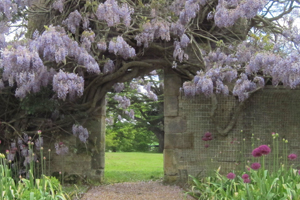 Neatly trained wisteria arch